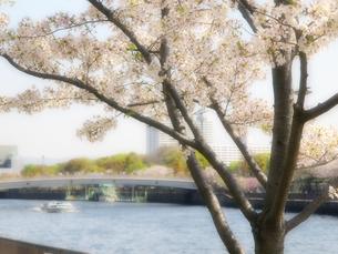 桜の木と船と川の写真素材 [FYI04746916]