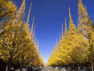 東京都 神宮外苑のイチョウ並木の写真素材 [FYI04747071]