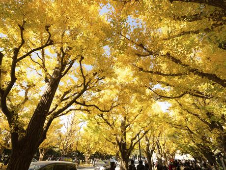 東京都 神宮外苑のイチョウ並木の写真素材 [FYI04747075]