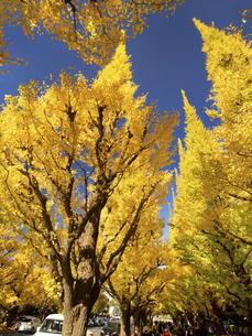 東京都 神宮外苑のイチョウ並木の写真素材 [FYI04747079]