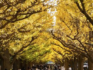 東京都 神宮外苑のイチョウ並木の写真素材 [FYI04747080]