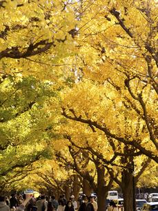 東京都 神宮外苑のイチョウ並木の写真素材 [FYI04747081]