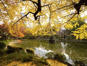 東京都 日比谷公園の紅葉の写真素材 [FYI04747084]