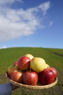 りんごの写真素材 [FYI04747217]