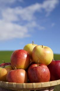 りんごの写真素材 [FYI04747219]
