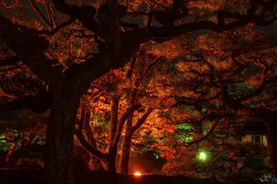 【香川県 高松市】秋の夜間ライトアップの栗林公園 日本庭園の写真素材 [FYI04747236]