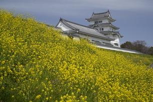 菜の花咲く千葉県野田市関宿関宿城図書館の写真素材 [FYI04747317]