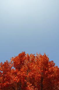 紅葉と青空の写真素材 [FYI04747481]