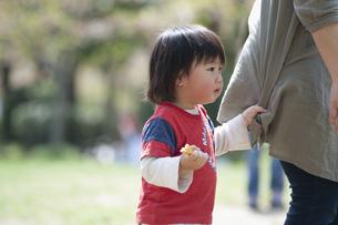 母親の服にしがみつく男児の写真素材 [FYI04747502]
