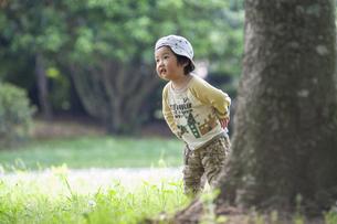 木の影から姿を見せる男児の写真素材 [FYI04747509]