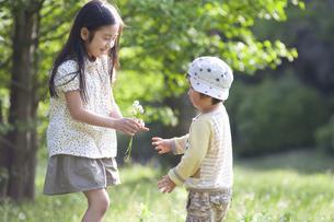 男児にシロツメクサの花を渡す女の子の写真素材 [FYI04747512]