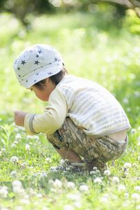 シロツメクサの花を集める男児の写真素材 [FYI04747514]