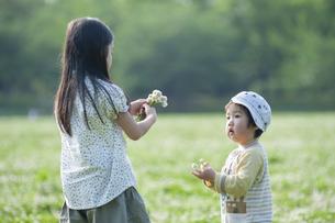 シロツメクサの花を集める姉弟の写真素材 [FYI04747522]