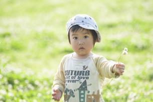 シロツメクサの花束を差し出す男児の写真素材 [FYI04747527]