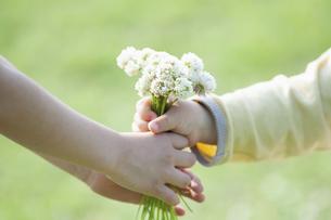 シロツメクサの花束を渡す手のアップの写真素材 [FYI04747528]