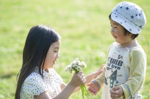 男児にシロツメクサの花を渡す女の子の写真素材 [FYI04747529]