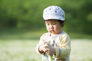 シロツメクサの花束を見つめる男児の写真素材 [FYI04747541]