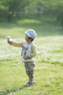 シロツメクサの花束を差し出す男児の写真素材 [FYI04747544]