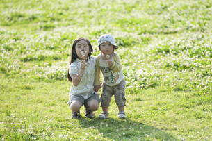 タンポポの綿毛を吹く姉弟の写真素材 [FYI04747548]