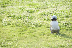 シロツメクサの花畑でたたずむ男児の後姿の写真素材 [FYI04747550]