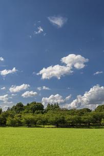 草原と青空と雲の写真素材 [FYI04747597]