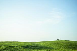 草原と一本の木の写真素材 [FYI04747610]