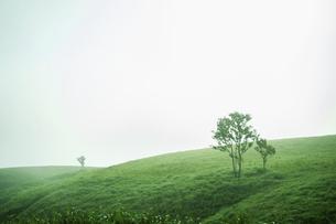 朝靄に包まれた草原と木の写真素材 [FYI04747614]