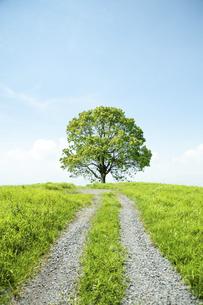 一本の道と樹の写真素材 [FYI04747616]
