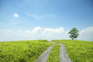 一本の道と樹の写真素材 [FYI04747617]