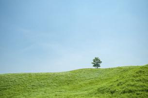 草原と一本の樹の写真素材 [FYI04747618]