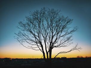 冬の朝の植物の写真素材 [FYI04747653]