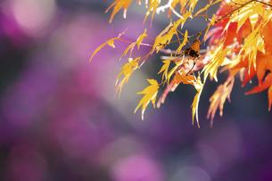 日本の秋の風景の写真素材 [FYI04747659]