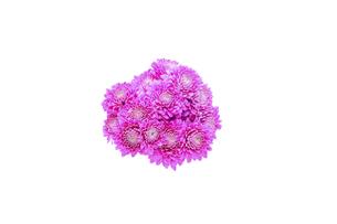 菊の花束の写真素材 [FYI04747660]