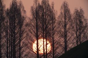 埼玉古墳 日の出の写真素材 [FYI04747672]