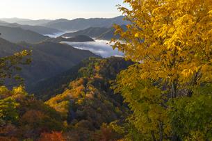 おにゅう峠 黄葉と雲海の写真素材 [FYI04747794]