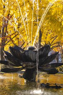 ハス型の噴水と銀杏の写真素材 [FYI04747813]