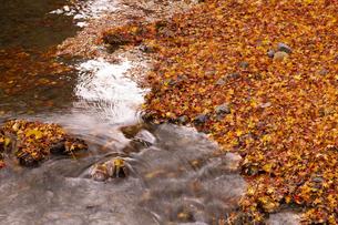 川と紅葉の落葉の写真素材 [FYI04747863]