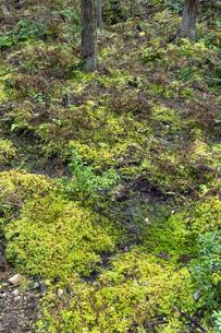 水苔の群生地の写真素材 [FYI04747904]