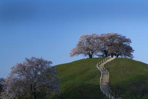 春のさきたま古墳の写真素材 [FYI04748080]