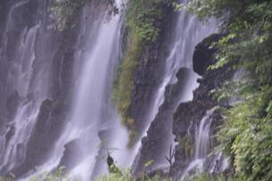 白糸の滝の写真素材 [FYI04748081]