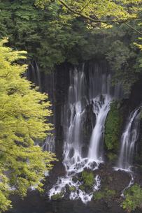 白糸の滝の写真素材 [FYI04748083]