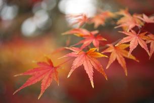 秋イメージの写真素材 [FYI04748088]