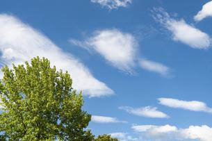 新緑の樹と青空と雲の写真素材 [FYI04748146]
