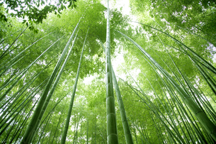 竹林の写真素材 [FYI04748364]