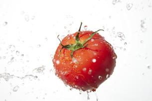 トマトの写真素材 [FYI04748411]