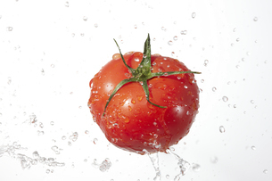 トマトの写真素材 [FYI04748419]