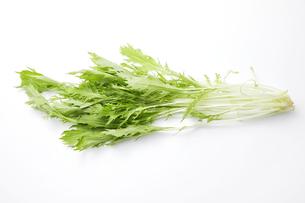 水菜の写真素材 [FYI04749140]