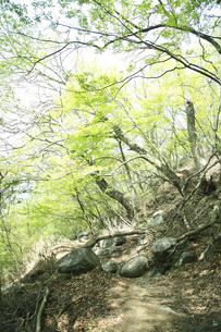 山道の写真素材 [FYI04750722]