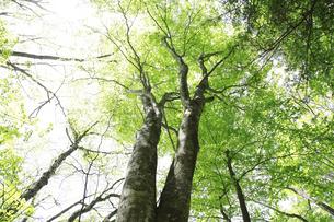 森の写真素材 [FYI04750731]