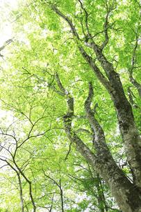 森の写真素材 [FYI04750734]